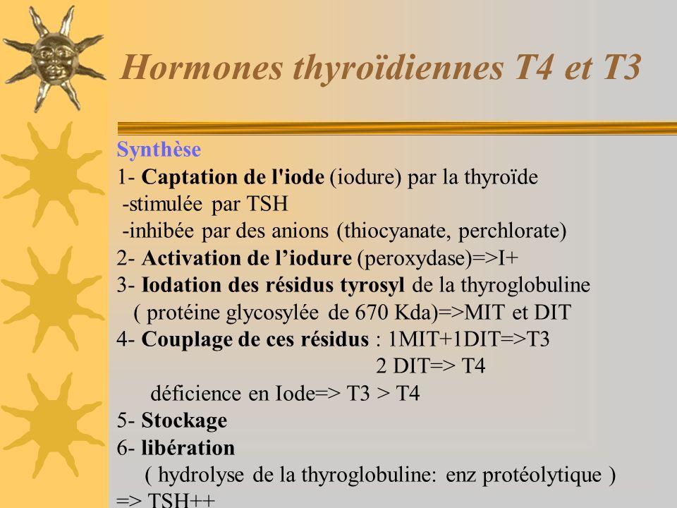 Hormones thyroïdiennes T4 et T3 Synthèse 1- Captation de l'iode (iodure) par la thyroïde -stimulée par TSH -inhibée par des anions (thiocyanate, perch