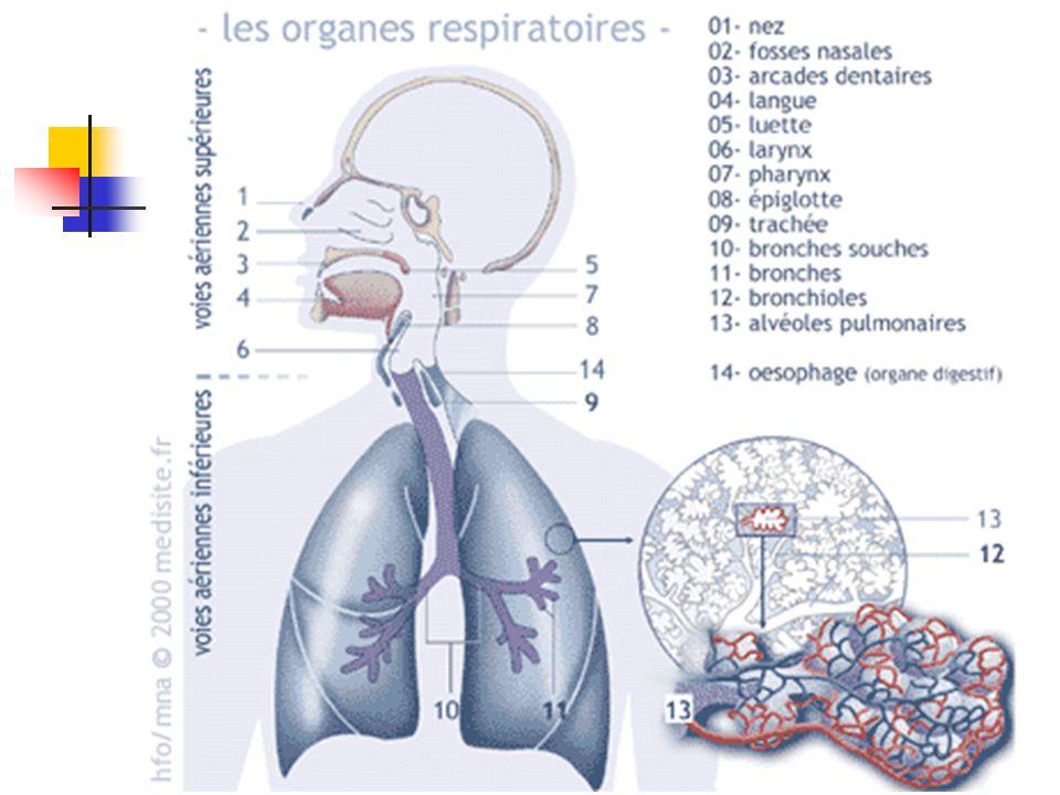 Rappels : Physiologie : Ventilation physiologique En pression négative Espace mort physiologique Assurer lhématose Apport de gazs humidifiés / réchauf