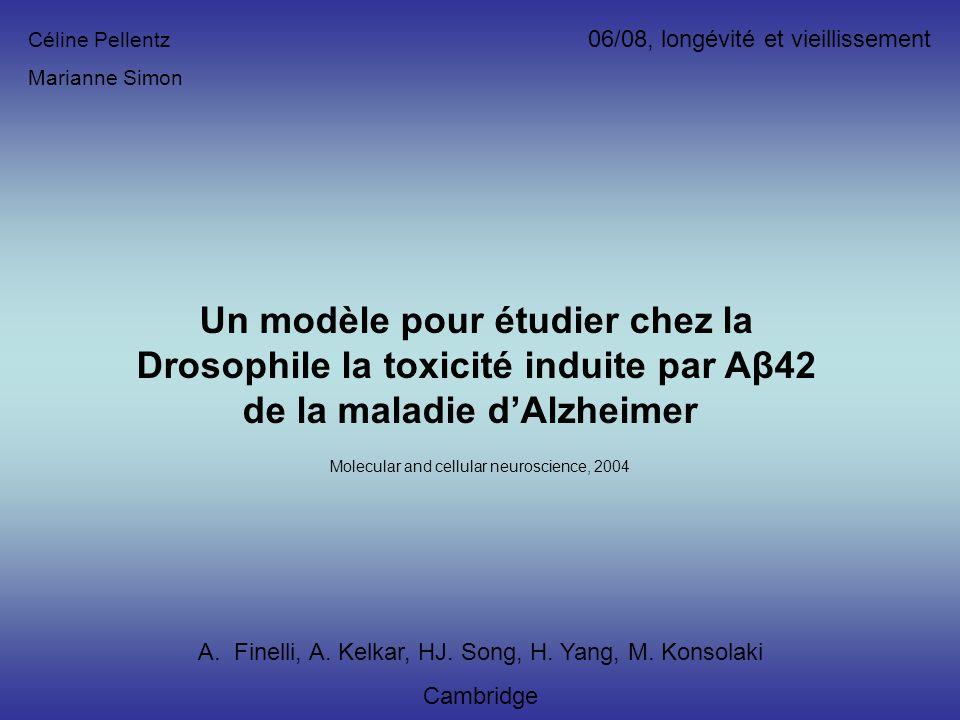 Un modèle pour étudier chez la Drosophile la toxicité induite par Aβ42 de la maladie dAlzheimer A.Finelli, A. Kelkar, HJ. Song, H. Yang, M. Konsolaki