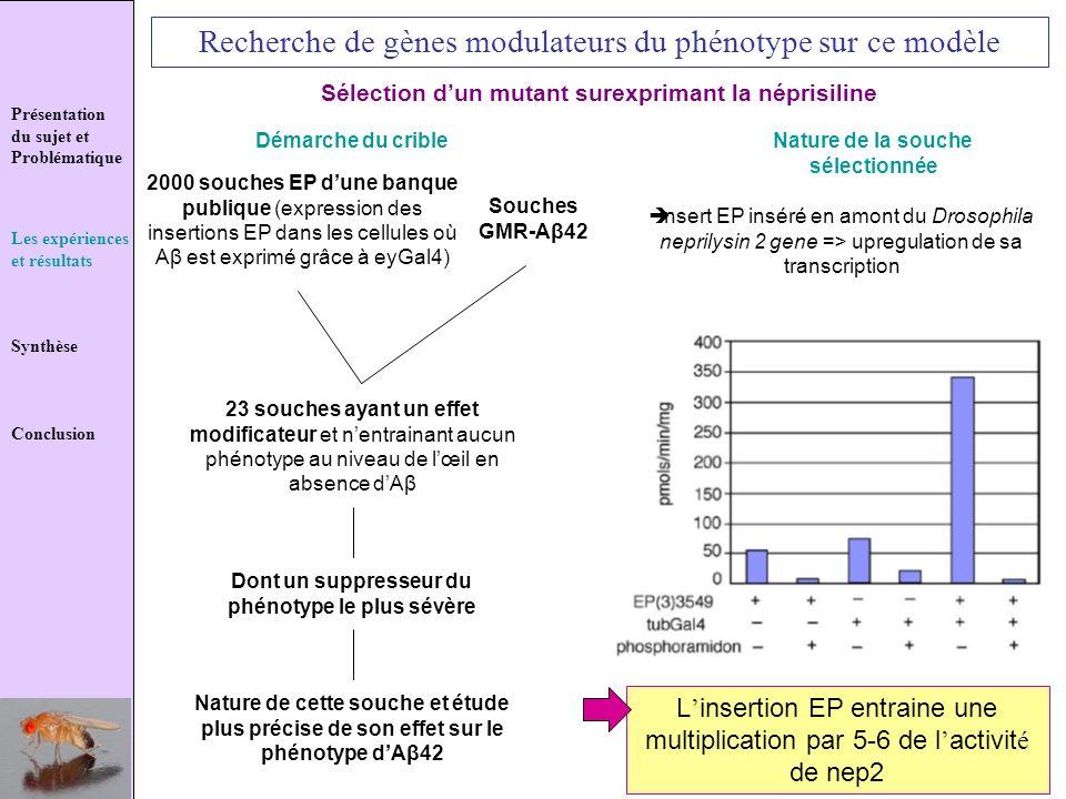 Présentation du sujet et Problématique Les expériences et résultats Synthèse Conclusion Recherche de gènes modulateurs du phénotype sur ce modèle Séle