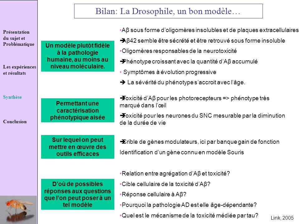 Présentation du sujet et Problématique Les expériences et résultats Synthèse Conclusion Bilan: La Drosophile, un bon modèle… Un modèle plutôt fidèle à