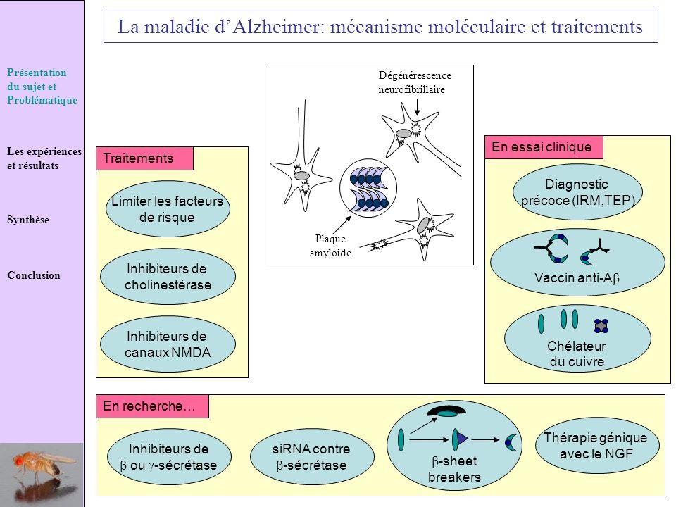 Présentation du sujet et Problématique Les expériences et résultats Synthèse Conclusion La maladie dAlzheimer: mécanisme moléculaire et traitements Pl