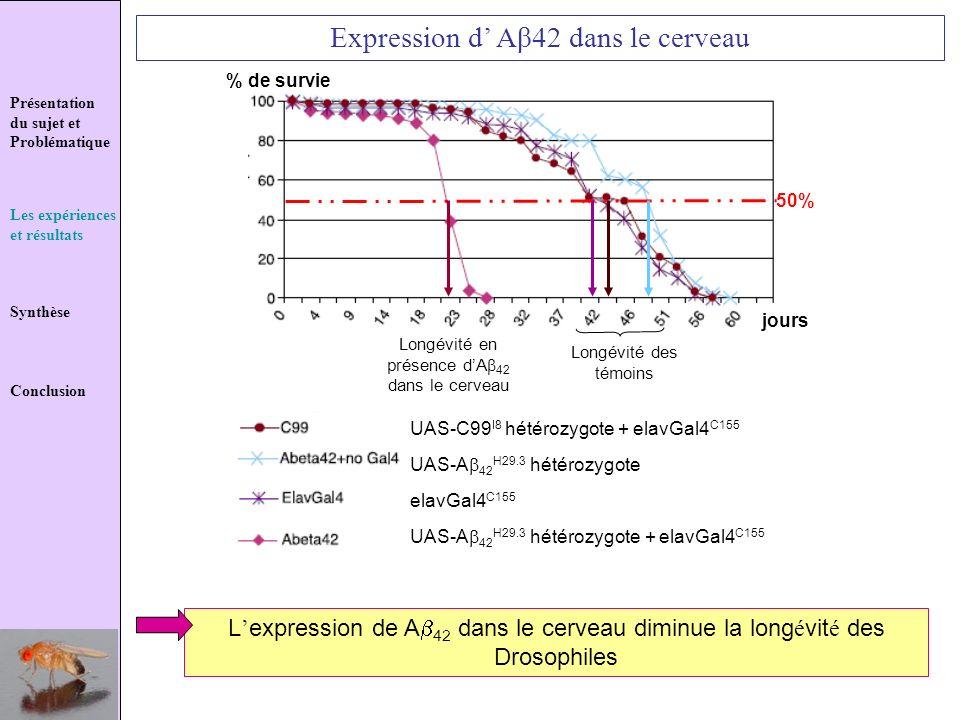 Présentation du sujet et Problématique Les expériences et résultats Synthèse Conclusion Expression d Aβ42 dans le cerveau 50% % de survie jours UAS-C9