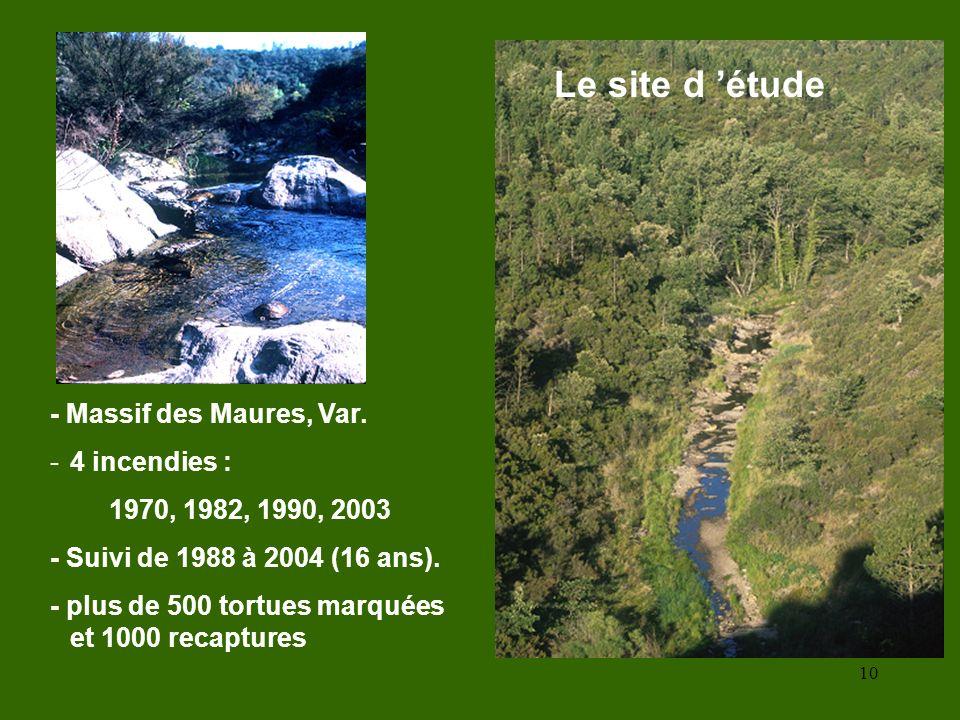 10 Le site d étude - Massif des Maures, Var. -4 incendies : 1970, 1982, 1990, 2003 - Suivi de 1988 à 2004 (16 ans). - plus de 500 tortues marquées et