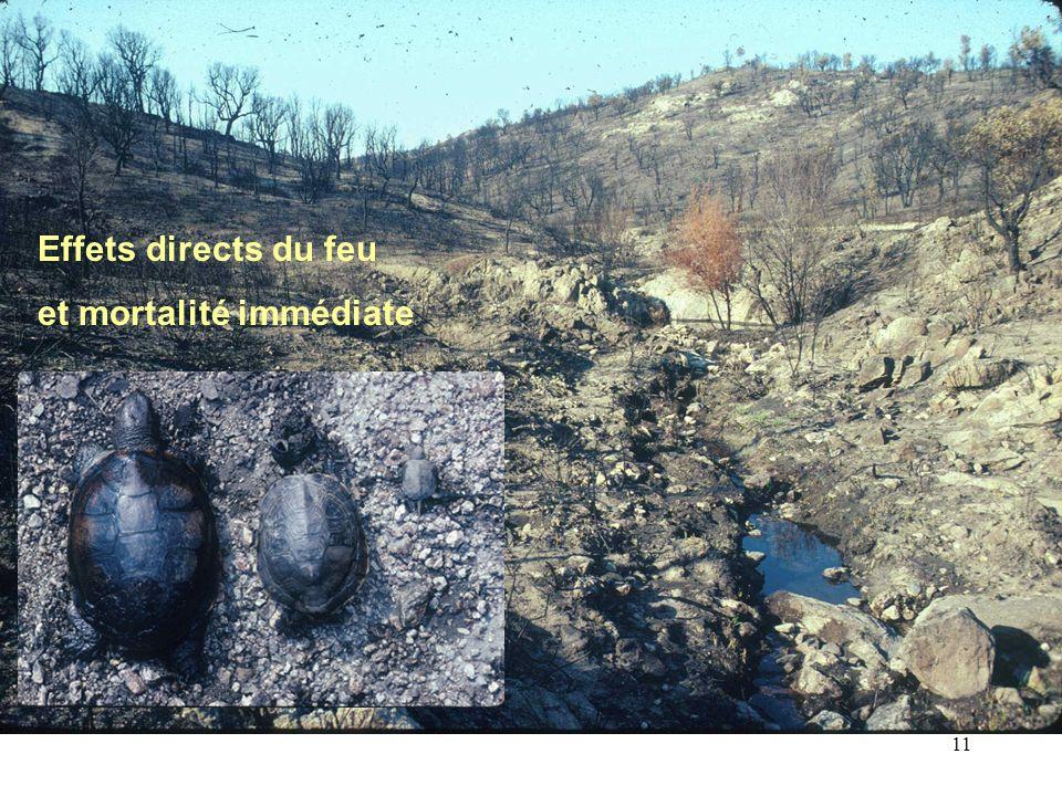 11 Effets directs du feu et mortalité immédiate