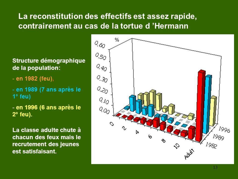 13 La reconstitution des effectifs est assez rapide, contrairement au cas de la tortue d Hermann Structure démographique de la population: - en 1982 (