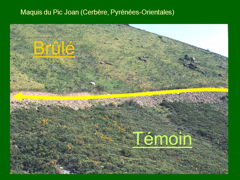 15 Maquis du Pic Joan (Cerbère, Pyrénées-Orientales) Brûlé Témoin