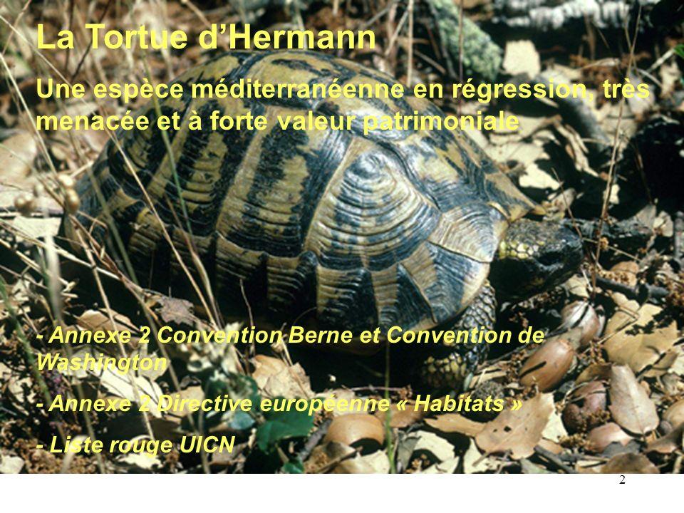 2 La Tortue dHermann Une espèce méditerranéenne en régression, très menacée et à forte valeur patrimoniale - Annexe 2 Convention Berne et Convention d