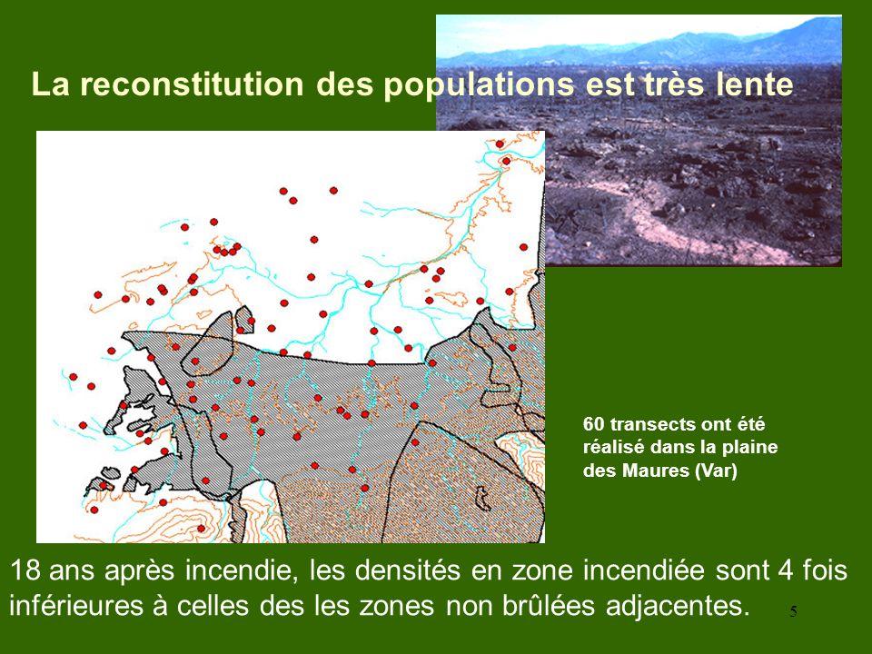 5 60 transects ont été réalisé dans la plaine des Maures (Var) 18 ans après incendie, les densités en zone incendiée sont 4 fois inférieures à celles