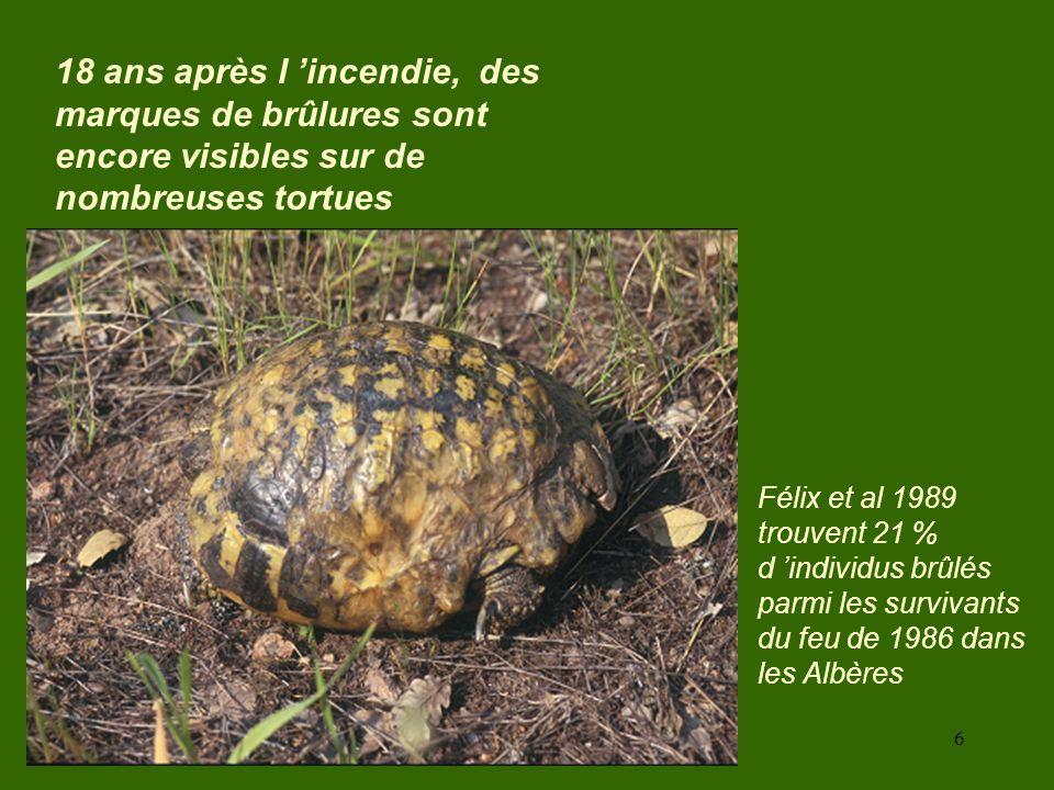6 18 ans après l incendie, des marques de brûlures sont encore visibles sur de nombreuses tortues Félix et al 1989 trouvent 21 % d individus brûlés pa