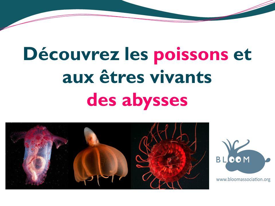 Les abysses Les océans occupent 99% de lespace où la vie peut se développer sur terre.