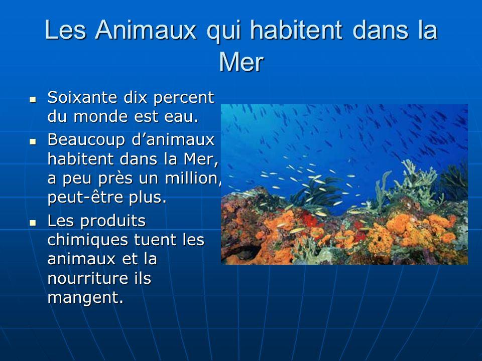 Les Animaux qui habitent dans la Mer Soixante dix percent du monde est eau. Soixante dix percent du monde est eau. Beaucoup danimaux habitent dans la