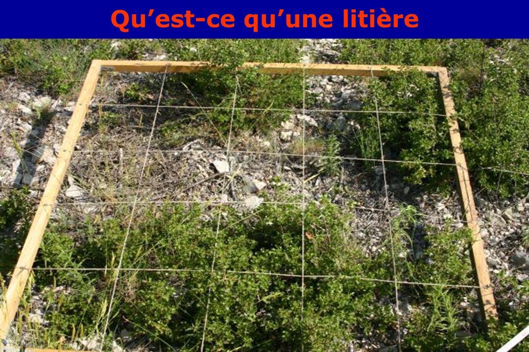 GIS Incendies de Forêt, Aix-en-Provence, 3 juin 20052 Quest-ce quune litière