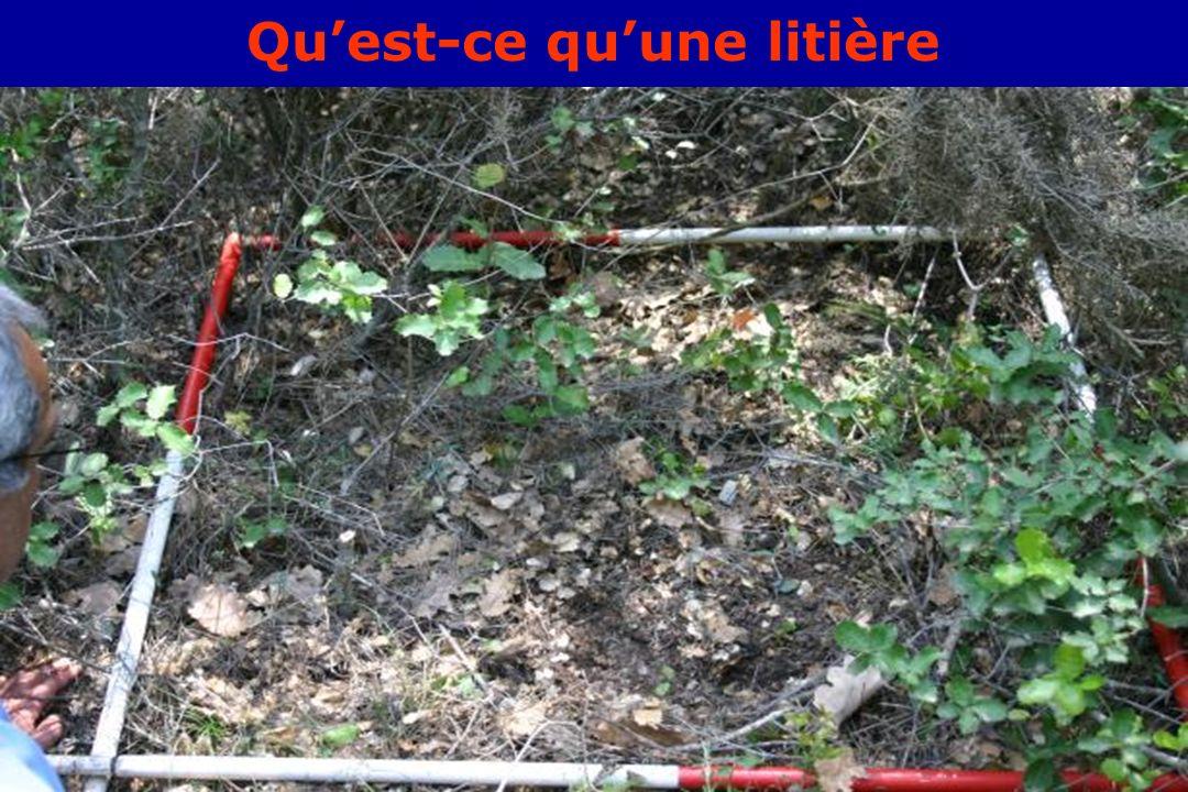 GIS Incendies de Forêt, Aix-en-Provence, 3 juin 20053 Quest-ce quune litière