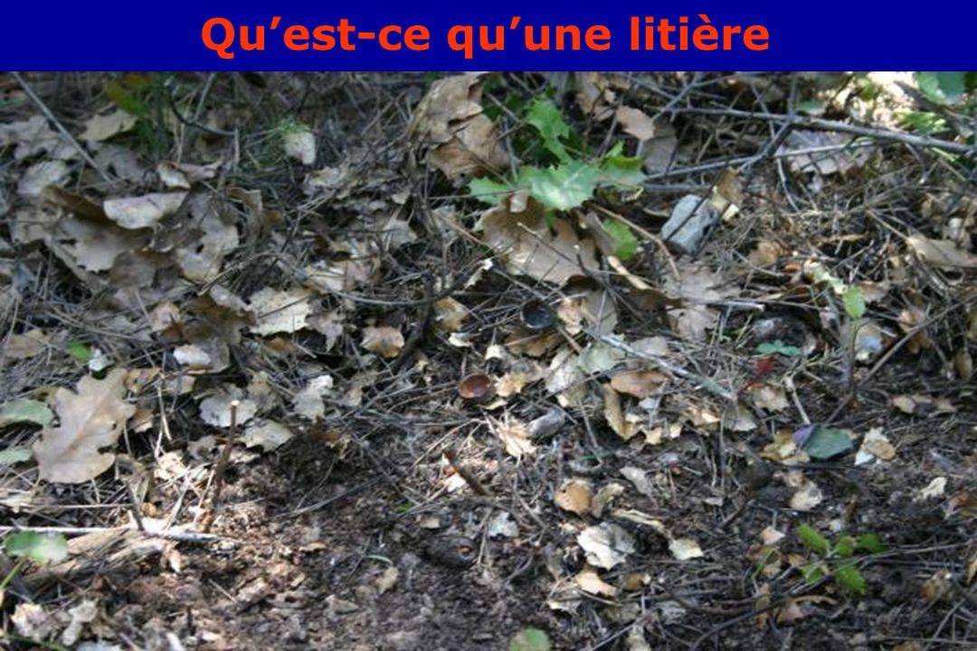 GIS Incendies de Forêt, Aix-en-Provence, 3 juin 20054 Quest-ce quune litière
