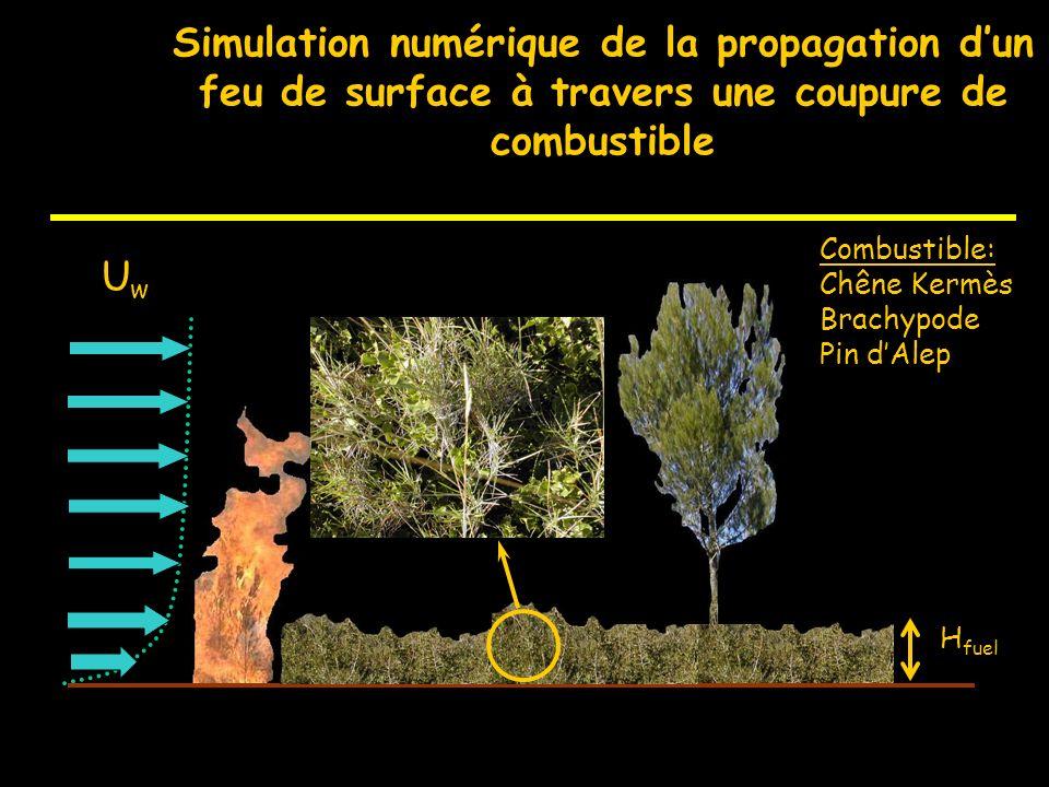 Mécanismes physiques de propagation dun feu en milieu naturel Rayonnement Convection Vapeur deau + Gaz Flamme Charbon Cendres