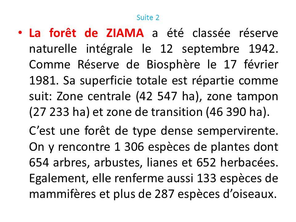 Suite 2 La forêt de ZIAMA a été classée réserve naturelle intégrale le 12 septembre 1942. Comme Réserve de Biosphère le 17 février 1981. Sa superficie