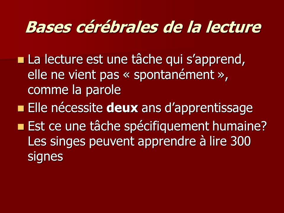 Bases cérébrales de la lecture « Si vuos pvueoz lrie ccei, vuos aevz asusi un dôrle de cvreeau.