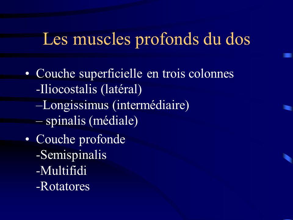 Les muscles profonds du dos Couche superficielle en trois colonnes -Iliocostalis (latéral) –Longissimus (intermédiaire) – spinalis (médiale) Couche pr