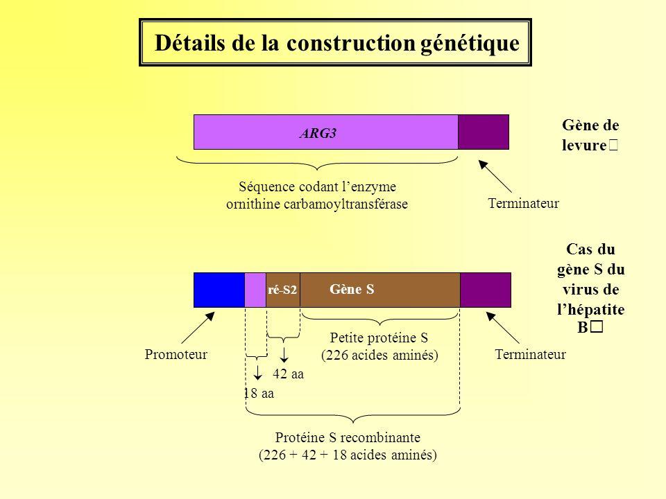 Détails de la construction génétique Terminateur 42 aa 18 aa Protéine S recombinante (226 + 42 + 18 acides aminés) Petite protéine S (226 acides aminé