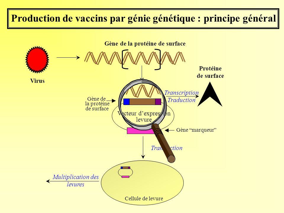 Production de vaccins par génie génétique : principe général Gène marqueur Vecteur dexpression levure Gène de la protéine de surface Virus Transcripti
