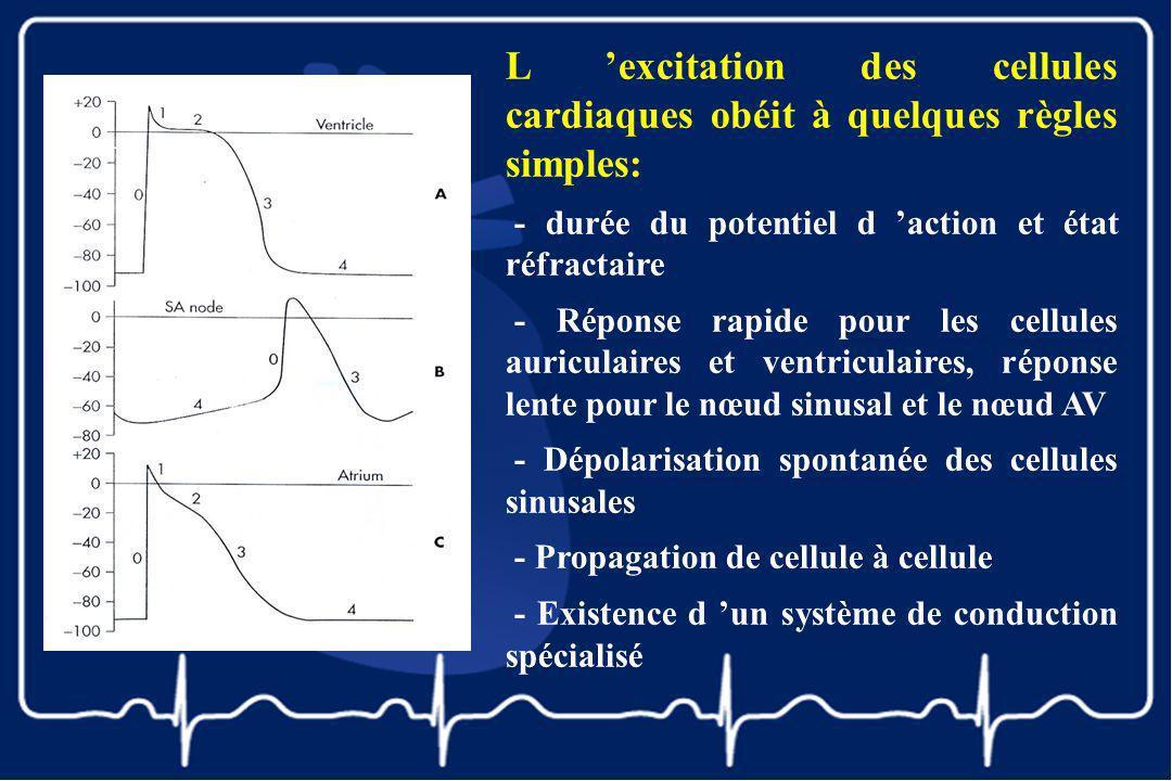 L excitation des cellules cardiaques obéit à quelques règles simples: - durée du potentiel d action et état réfractaire - Réponse rapide pour les cell