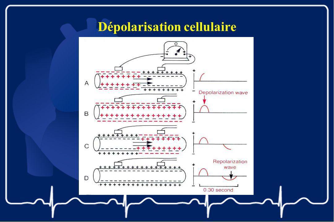 Dépolarisation cellulaire