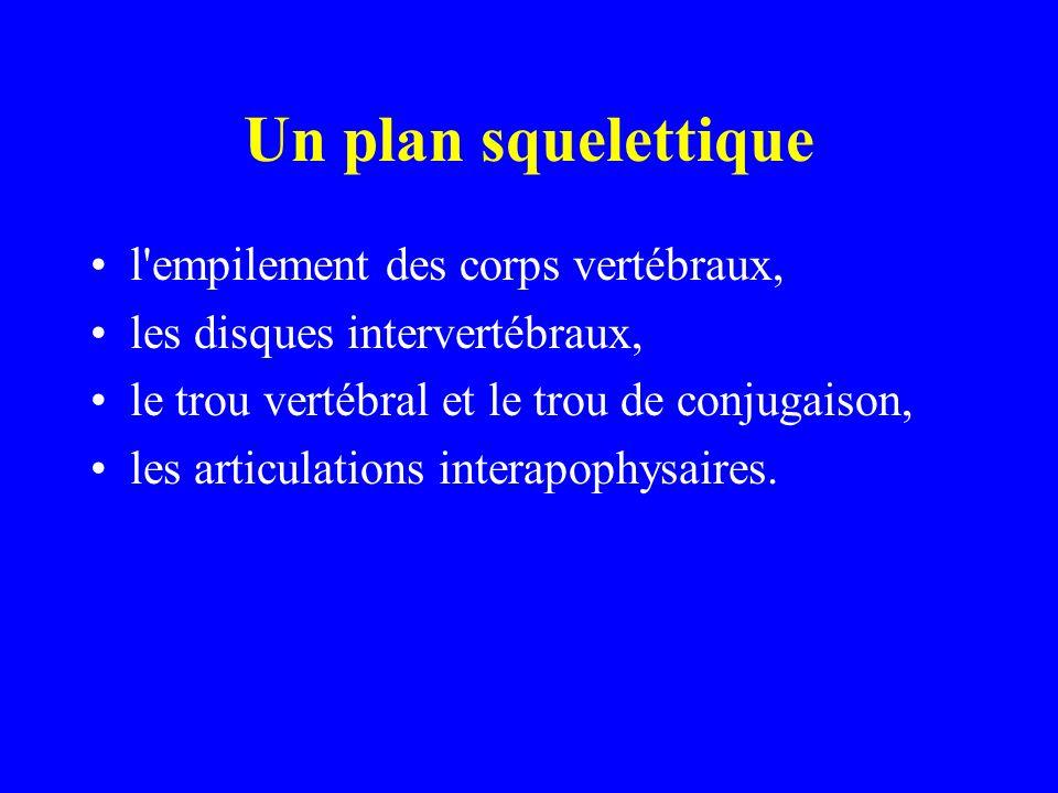 Un plan squelettique l'empilement des corps vertébraux, les disques intervertébraux, le trou vertébral et le trou de conjugaison, les articulations in