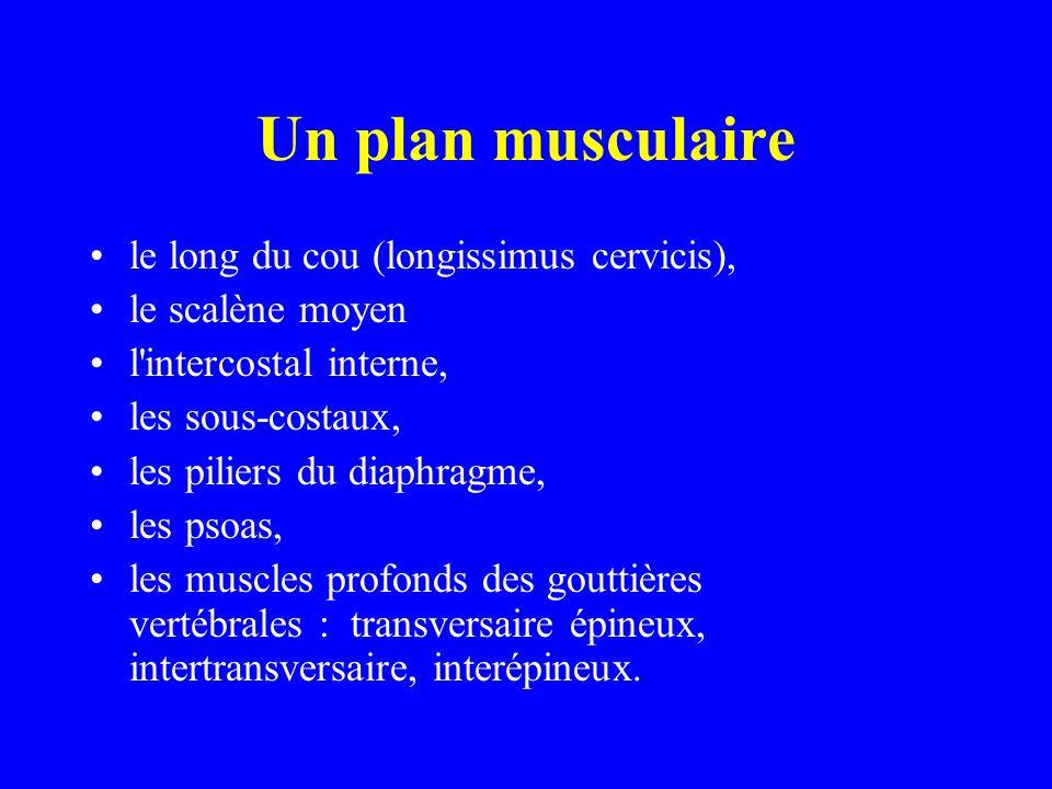 Un plan musculaire le long du cou (longissimus cervicis), le scalène moyen l'intercostal interne, les sous-costaux, les piliers du diaphragme, les pso