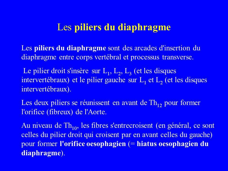 Les piliers du diaphragme Les piliers du diaphragme sont des arcades d'insertion du diaphragme entre corps vertébral et processus transverse. Le pilie