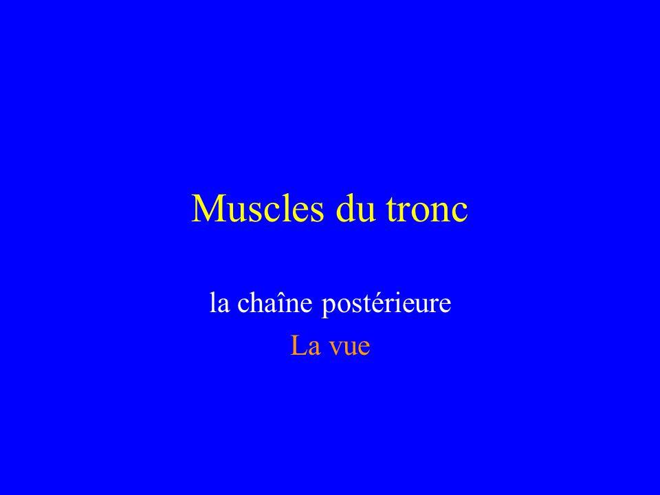 Muscles du tronc la chaîne postérieure La vue