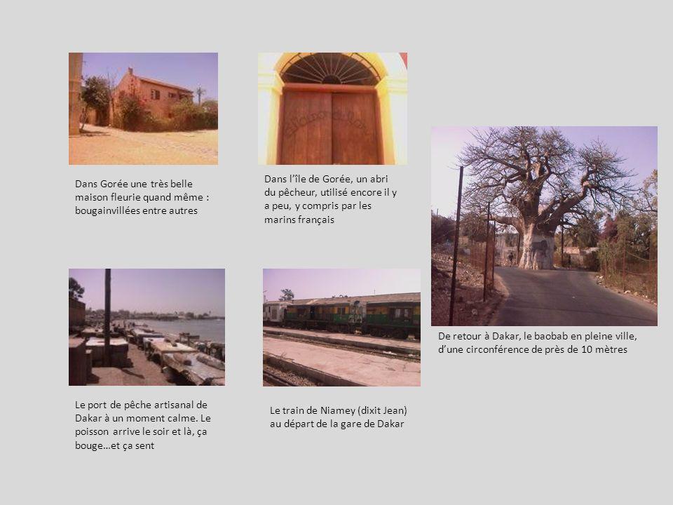 Dans Gorée une très belle maison fleurie quand même : bougainvillées entre autres Dans lîle de Gorée, un abri du pêcheur, utilisé encore il y a peu, y compris par les marins français De retour à Dakar, le baobab en pleine ville, dune circonférence de près de 10 mètres Le port de pêche artisanal de Dakar à un moment calme.