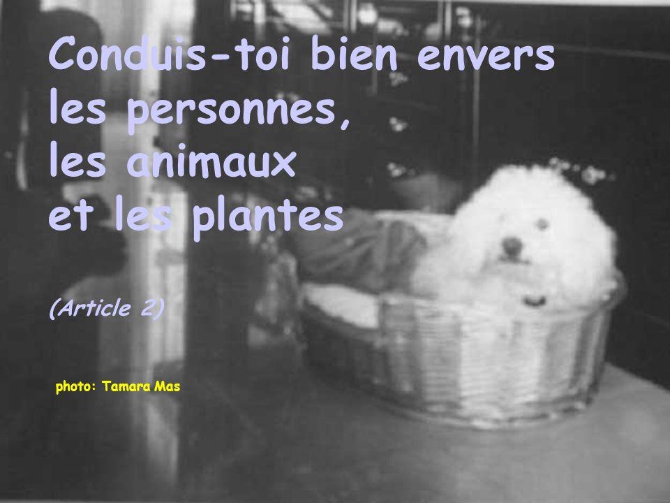 photo: Tamara Mas Conduis-toi bien envers les personnes, les animaux et les plantes (Article 2)