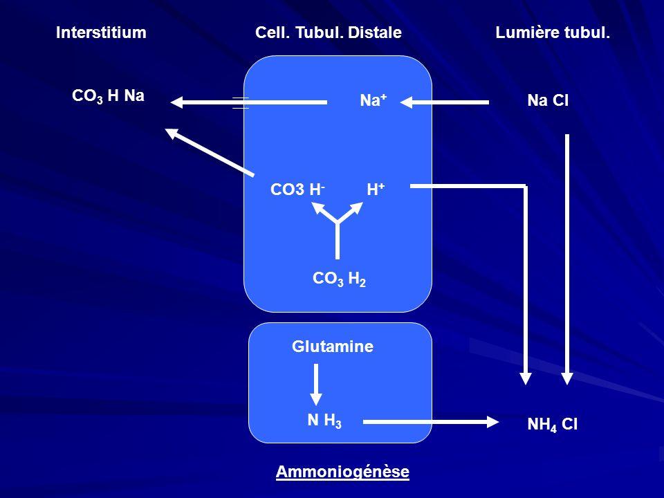 InterstitiumCell. Tubul. DistaleLumière tubul. Na Cl Na + CO 3 H Na CO 3 H 2 CO3 H - H + Glutamine N H 3 NH 4 Cl Ammoniogénèse