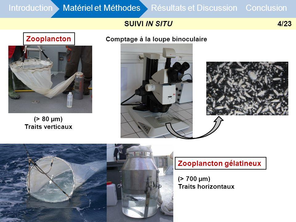 (> 700 µm) Traits horizontaux (> 80 µm) Traits verticaux Zooplancton Zooplancton gélatineux Introduction Matériel et Méthodes Résultats et Discussion