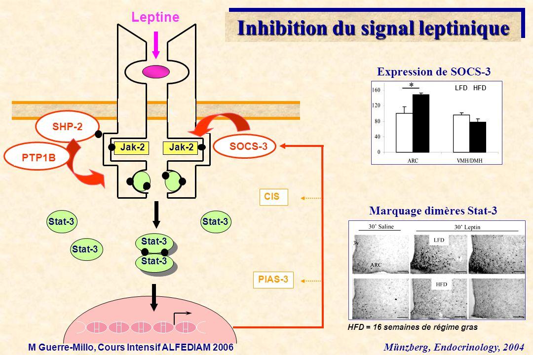 Inhibition du signal leptinique Jak-2 SHP-2 SOCS-3 Stat-3 Leptine Stat-3 CIS PIAS-3 PTP1B HFD = 16 semaines de régime gras Marquage dimères Stat-3 Exp