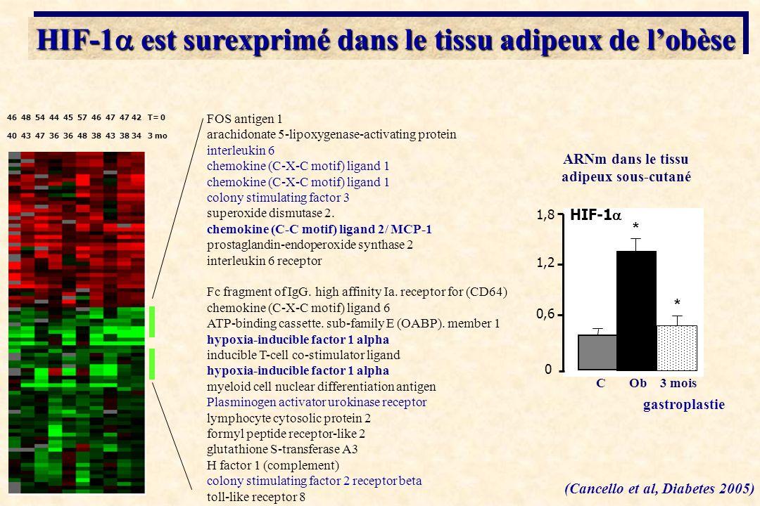 FOS antigen 1 arachidonate 5-lipoxygenase-activating protein interleukin 6 chemokine (C-X-C motif) ligand 1 colony stimulating factor 3 superoxide dis