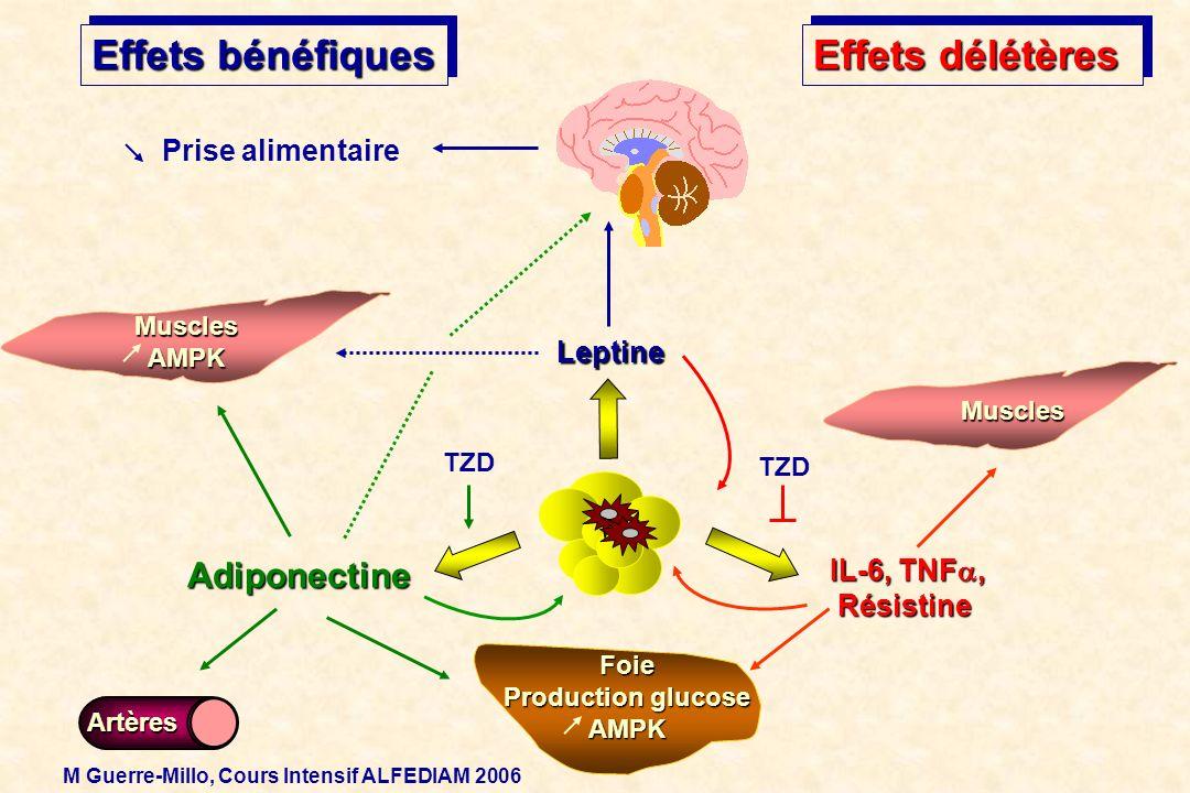 Leptine Prise alimentaire Effets bénéfiques MusclesAMPK IL-6, TNF, Résistine Muscles Foie Production glucose AMPK Effets délétères Adiponectine Artère