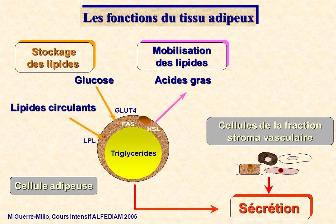 Acides gras Lipides circulants Triglycerides Glucose Stockage des lipides Mobilisation des lipides Les fonctions du tissu adipeux LPL GLUT4 FAS HSL Sé