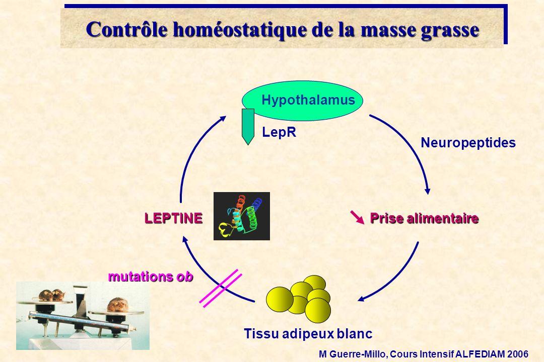 Tissu adipeux blanc LEPTINE Prise alimentaire mutations ob Neuropeptides Hypothalamus LepR Contrôle homéostatique de la masse grasse M Guerre-Millo, C