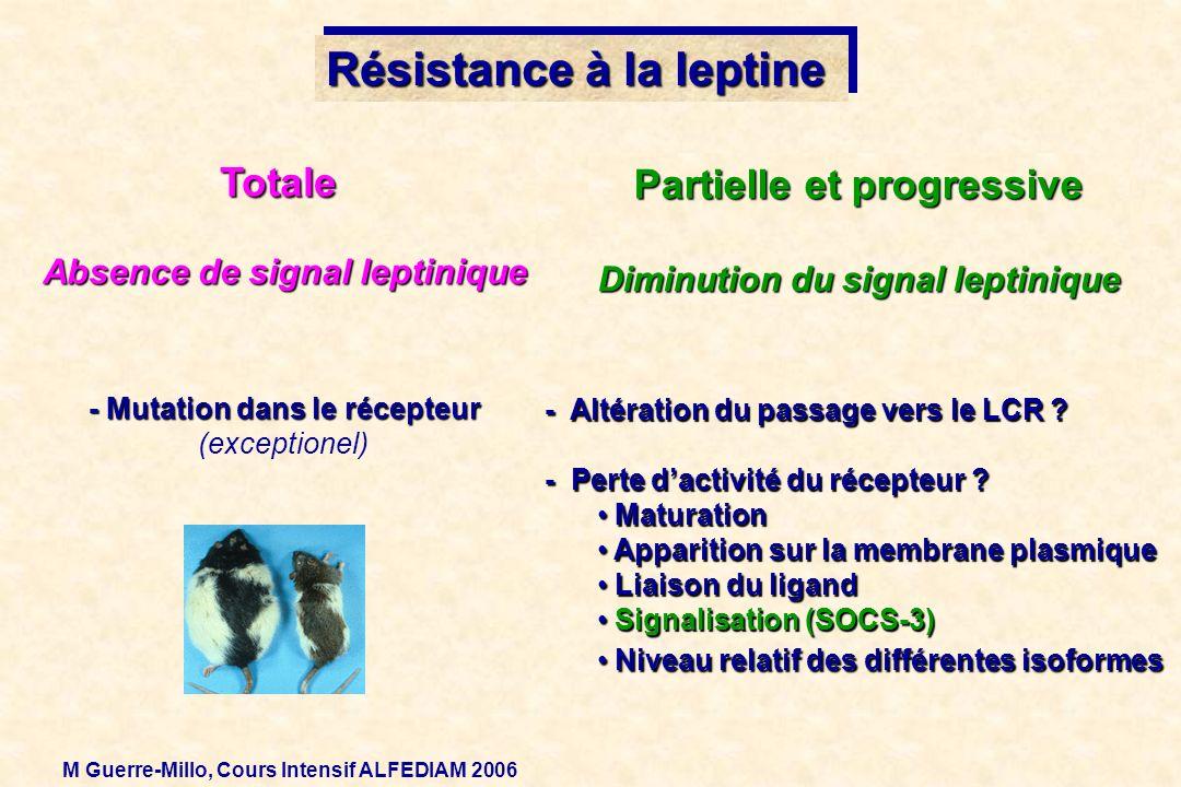 Résistance à la leptine - Mutation dans le récepteur (exceptionel) - Altération du passage vers le LCR ? - Perte dactivité du récepteur ? Maturation M