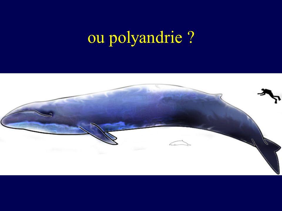 ou polyandrie ?