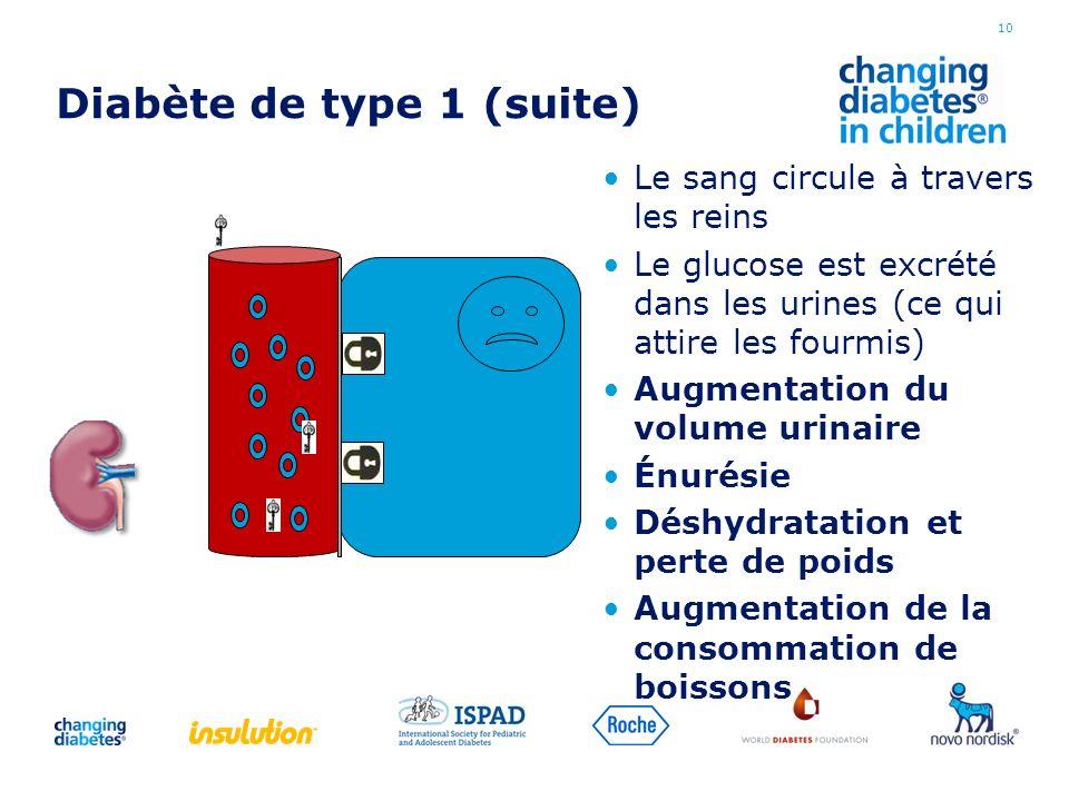 Diabète de type 1 (suite) Le sang circule à travers les reins Le glucose est excrété dans les urines (ce qui attire les fourmis) Augmentation du volum
