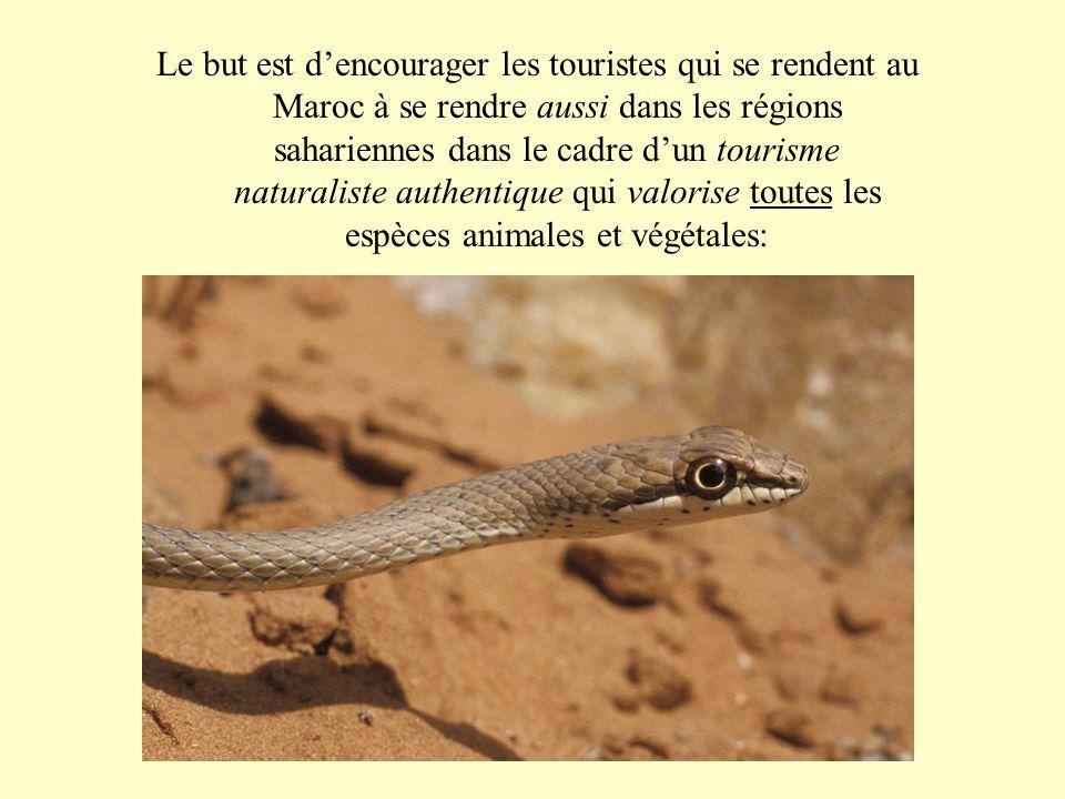 Le but est dencourager les touristes qui se rendent au Maroc à se rendre aussi dans les régions sahariennes dans le cadre dun tourisme naturaliste aut