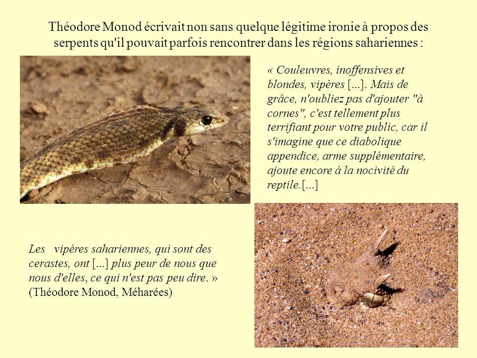 Théodore Monod écrivait non sans quelque légitime ironie à propos des serpents qu'il pouvait parfois rencontrer dans les régions sahariennes : « Coule