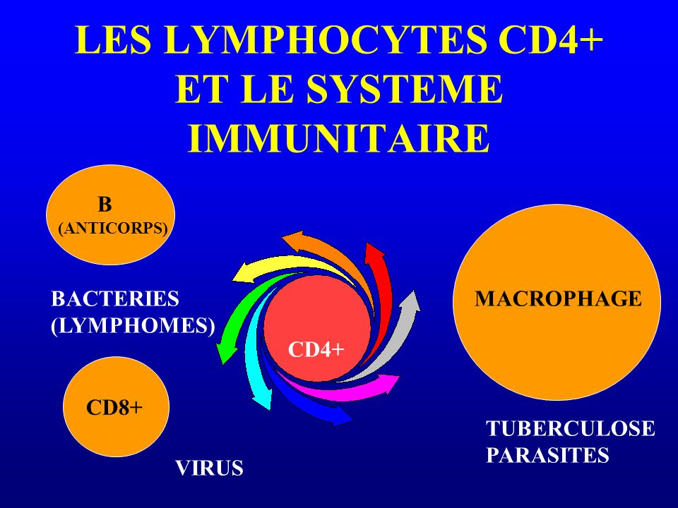 LES LYMPHOCYTES CD4+ ET LE SYSTEME IMMUNITAIRE MACROPHAGE CD8+ CD4+ TUBERCULOSE PARASITES VIRUS BACTERIES (LYMPHOMES) B (ANTICORPS)