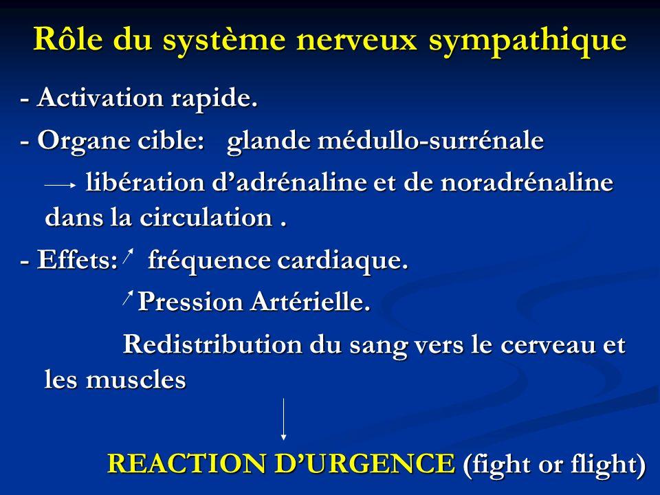 Rôle du système nerveux sympathique - Activation rapide. - Organe cible: glande médullo-surrénale libération dadrénaline et de noradrénaline dans la c