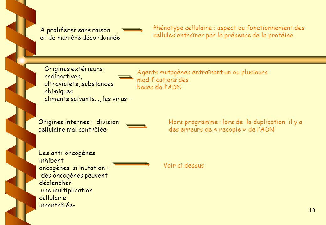 9 Les expressions à retenir Expression du texte Connaissances Les oncogènes Gènes : fragment dADN contenant linfo génétique (= un allèle ) pour la syn