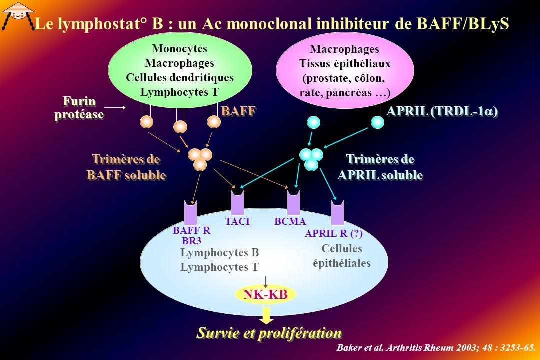 Le lymphostat° B : un Ac monoclonal inhibiteur de BAFF/BLyS Monocytes Macrophages Cellules dendritiques Lymphocytes T Macrophages Tissus épithéliaux (