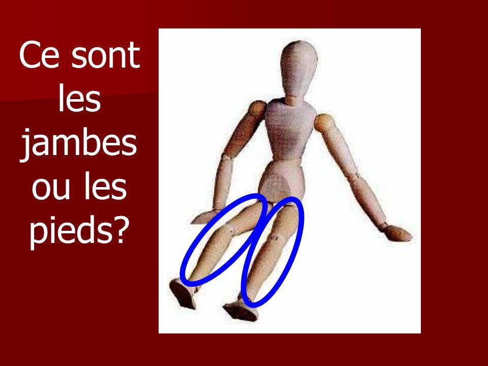 Ce sont les jambes ou les pieds?